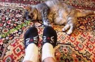 Носочки с кошкой